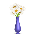 Chamomiles in vase isolated on white vector image