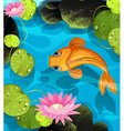 Koi swimming in the lotus pool vector image