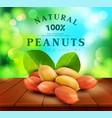 peanut kernels with green leaves design element vector image