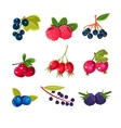 Juicy Colorful Berry Set vector image