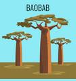 african baobab tree icon emblem vector image