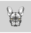 Hand drawn french bulldog portrait vector image