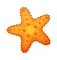 starfish sea star and shell colorful cartoon vector image