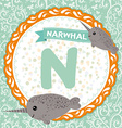 ABC animals N is narwhal Childrens english vector image