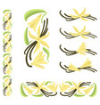 vanilla pods with flowers and leaves vector image vector image