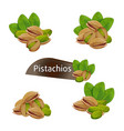 pistachios kernel in nutshell with leaves set vector image