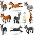 Horses and donkeys in different poses vector image vector image
