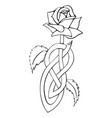 celtic knotted rose vector image