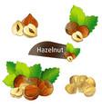 hazelnut kernel with green leaves set vector image