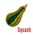 Ripe squash vegetable icon cartoon style vector image