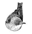 bird doodle hand drawn vector image