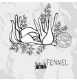 Hand drawn whole and sliced fennel vector image