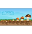 Mushroom Growth Process Infographics vector image