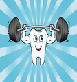 Cartoon Tooth Character Lifting Weights vector image