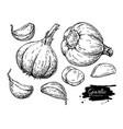 garlic hand drawn set vector image