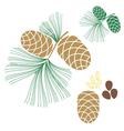 Pine cone Cedar tree vector image