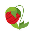 strawberry on bush isolated red berries on white vector image