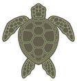 sea turtle vector image