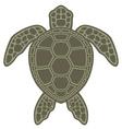 sea turtle vector image
