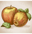 engraving two apples retro style vector image vector image