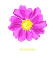Decorative zinnia flower vector image