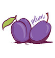 hand drawn plum sketch style vector image