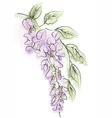 wisteria vector image