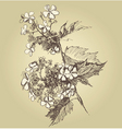 guilder rose vector image