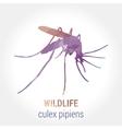 Wildlife banner - culex pipiens vector image