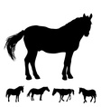horse silhouette set vector image
