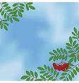 Background with rowanberry on sky vector image vector image