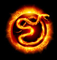 Colorful card with fire snake twenty thirteen new vector image