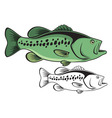 largemouth bass vector image vector image