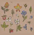 botanic seamless craft pattern vector image