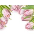 Pink fresh tulips on white EPS 10 vector image