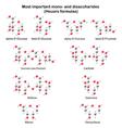 Chemical models of main mono- and disaccharides vector image