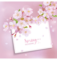 Cherry Blossom Spring Background - with Card vector image