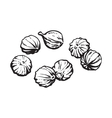 Coriander seeds sketch style vector image