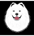 Dog samoyed buddy puppy vector image