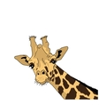 the head of a giraffe vector image
