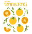 Yellow tomatoes vector image