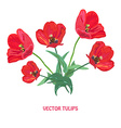 red tulip flowers vector image