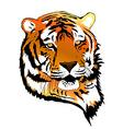 Tiger Portrait vector image