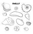 Set of hand drawn shells vector image vector image