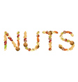 nuts word vector image