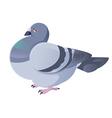 Pigeon vector image