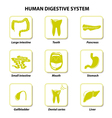 Set icons Human anatomy vector image