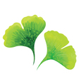 Ginkgo leaves vector image