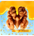 Walnut background vector image vector image