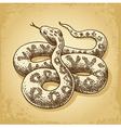 Ground Snake vector image